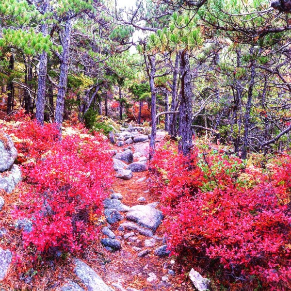 Acadia Magical Fall Foliage